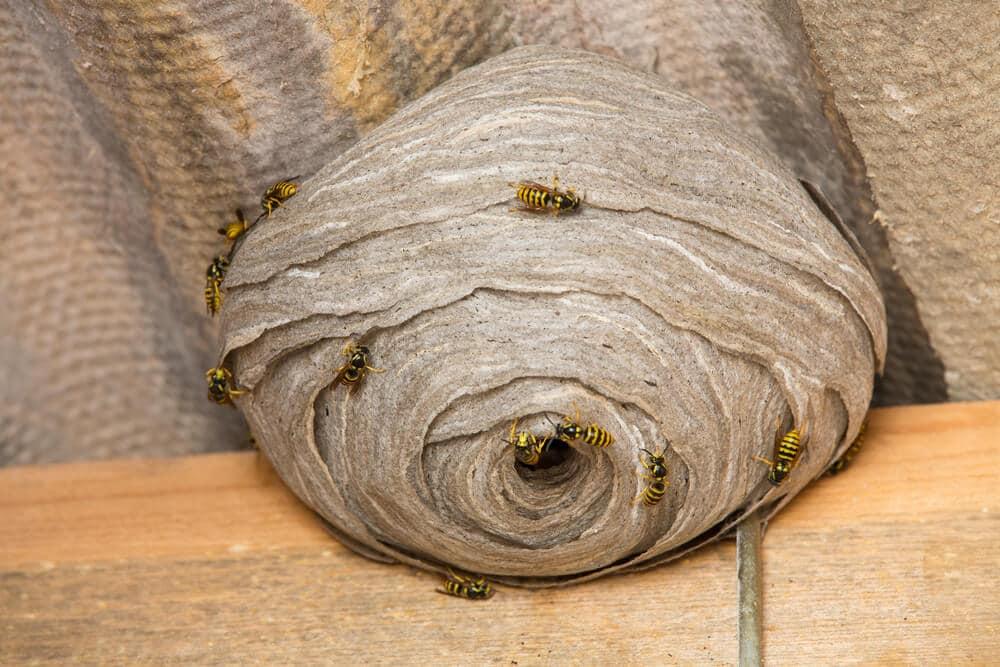 allergie voor bijen en wespensteken. Black Bedroom Furniture Sets. Home Design Ideas