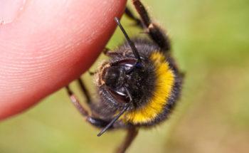 Allergie op bijen- en wespensteken